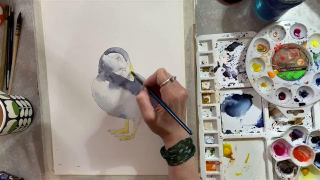 Puffin Watercolour LIVE