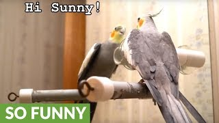 Listen to what this brilliant talking cockatiel can say