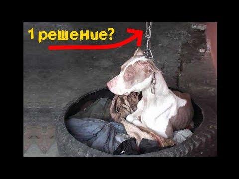 Собака прикованная столбу не за 30 июля