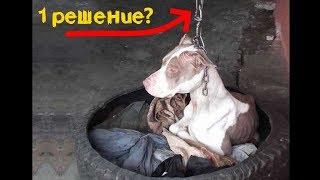 Собака, прикованная к столбу, не может даже опустить голову, но должна охранять склад