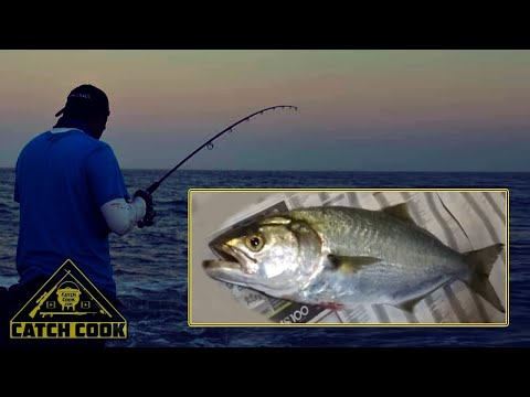 Elf / Shad / Bluefish - CATCH COOK - Night Fishing