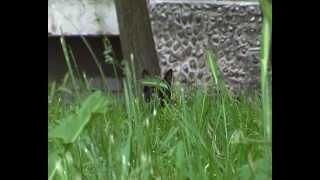 Черная кошка в зеленой траве. Black cat in the green grass.