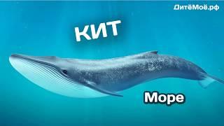 Кит. Энциклопедия для детей про животных. Море