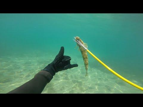Spearfishing Port Phillip Bay Summer 2016 (Victoria Australia)