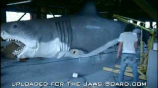 JAWS - The Taylor Footage