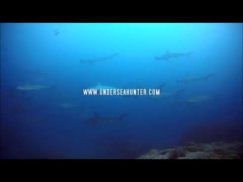 Hammerheads of Cocos Island