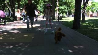 Наша ездовая собака