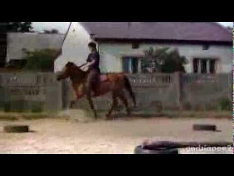 Part 2 For Domcia620...Beautiful Horses... : )