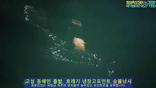 뉴그린호 고성 화살촉오징어 씨알 역대급, 화살촉 꾸준한…