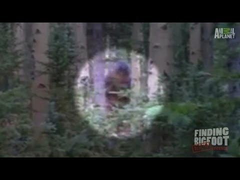 A Nonchalant Sighting in Utah | Finding Bigfoot: Rejected Evidence