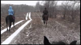 конная прогулка видео