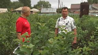 видео Плодово ягодные кустарники