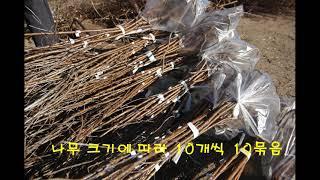 중국에선 흔한 비타민나무 중국도로변  경사지  절개지에…