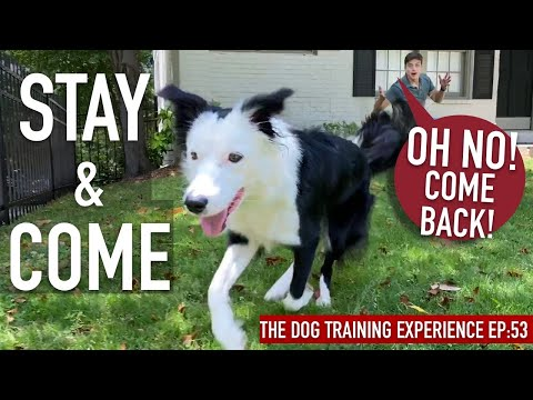 How To Train ANY Dog a RELIABLE Come And Stay ANYWHERE!