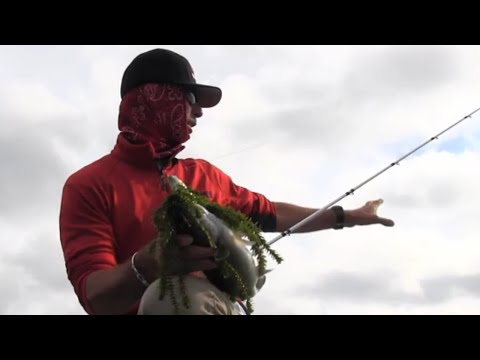Toledo Bend Bass Fishing Tips With Mike Iaconelli
