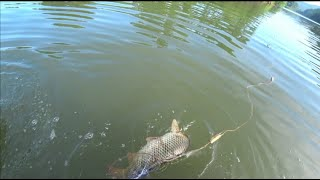 Рыбалка на сети проверка дальнего кардона Часть1