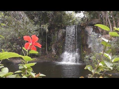 """""""Garden of the Groves"""" - Freeport, Bahamas"""