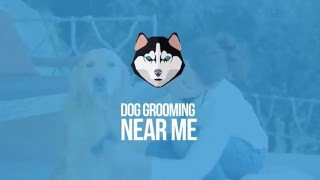 Dog Grooming Near Me - Find Dog Groomers Near Your Location