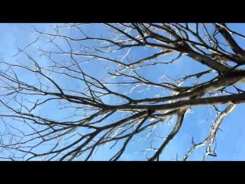 árbol podrido a punto de caerse