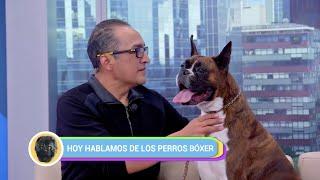 HeralDog | Sergio Martínez, criador de bóxer | Elizabeth Tejeda: los parásitos | #PerrosPremier