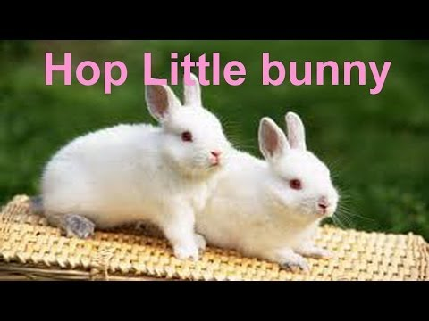 Hop Little Bunny Poem - English Nursery Rhymes - Shemaroo Kids
