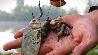 ЧТО ВЫБРАЛ СОМ Моя трофейная рыбалка 2021 на сома Ловля сома на донку с берега