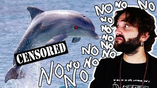 What you did NOT want to know about dolphins - NASTY SCIENCE