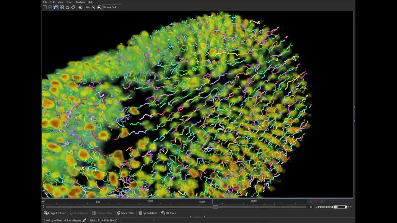 Aivia 7 - 3D cell tracking (track display options)
