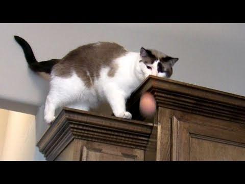 Amazing Cat Egg Trick – Win a Google TV!