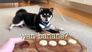 hey-shibe-would-you-like-some-banane