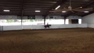 Queenie- Jared Lesh cowhorses