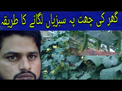 Vegetables on the roof of the house 🏡 - YouTube