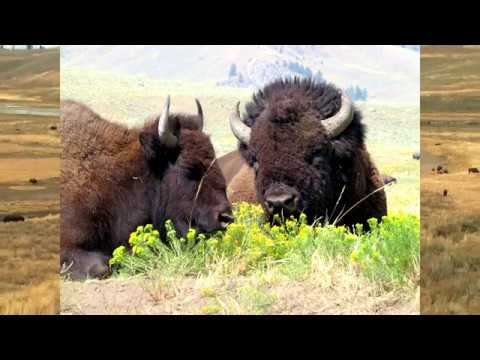 60 Second Spotlight   Yellowstone & The Grand Tetons National Parks