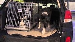 Koira matkustaa turvallisesti autossa