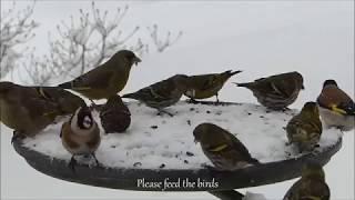 Please feed the birds!