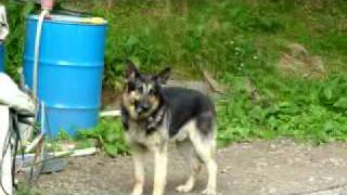 東日本大震災で飼い主をなくして、被災ペット支援のボランティア団体を...