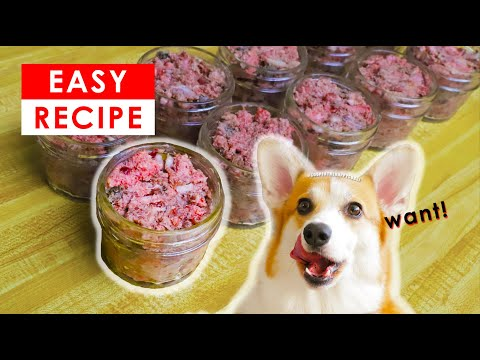 BEST HOMEMADE RAW DOG FOOD RECIPES - MADE EASY!!!