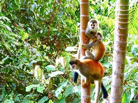 Cute Baby Squirrel Monkey