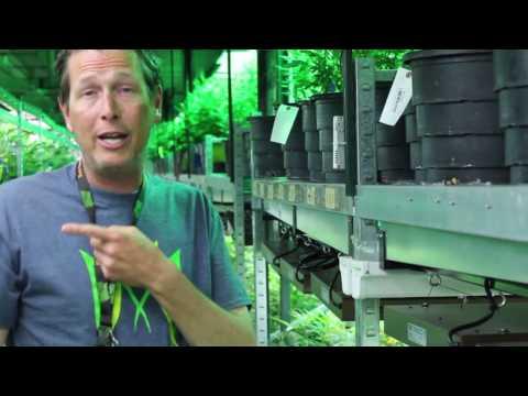 The Medicine Man Weed Factory Tour 420 | Denver, CO
