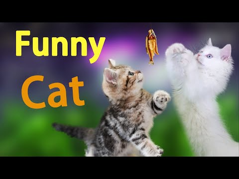 Funny Cat Videos | Compilation of Best Funny Cat Videos | funny cat videos that make you smile