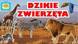 Dzikie zwierzęta - Nauka dzikich zwierząt dla dzieci po polsku - Odgłosy zwierząt