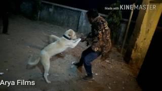 whatsapp funny dog dance