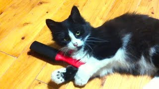 フワフワ猫のピーちゃん ~A Ladylike cat~