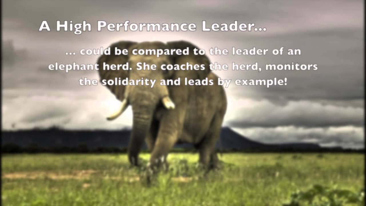 learn excellent leadership from the amazing elephant learn excellent leadership from the amazing elephant