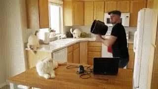Технология мечты коты