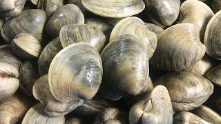 Catch & Cook Clams - Shelling & Clamming on Deserted Island in Outer Banks NC - Clam PoBoy Recipe