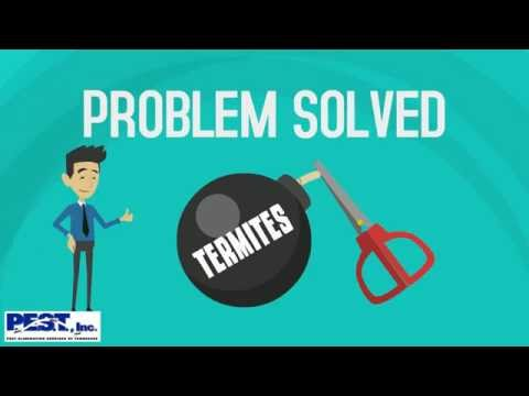 Explainer video for pest control company about termites