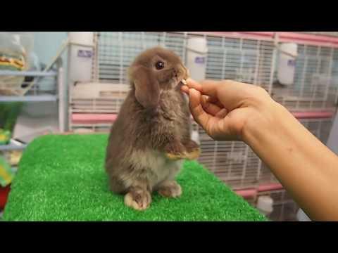 หัดกระต่ายยืน_Rabbit2you.mp4