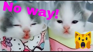 🙀Adorable Cats and Kittens videos - Funny Cat Videos/Compilation