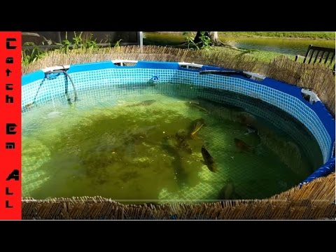 HOW TO BUILD A POND using a POOL in your backyard! Catch_Em_All_Fishing General DIY Pond OverView
